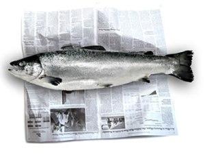 news_fish (1)