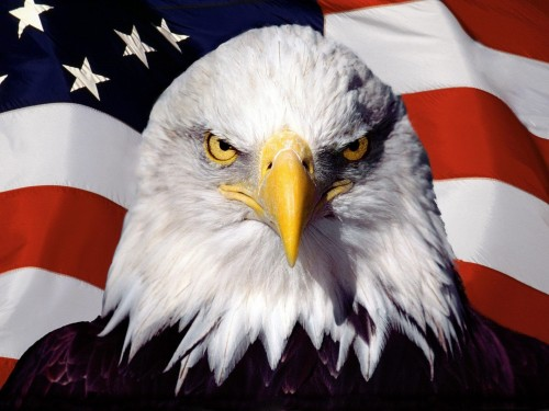 American-Patriot-1440x1920